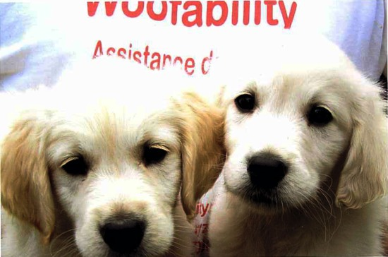woofability charity