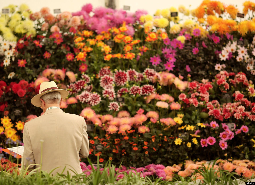 Royal horticultural society hampton court palace flower show bath knight blog - Royal flower show ...