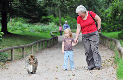visiting monkey forest