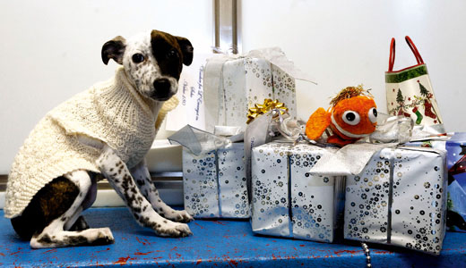 Battersea Dogs and Cats
