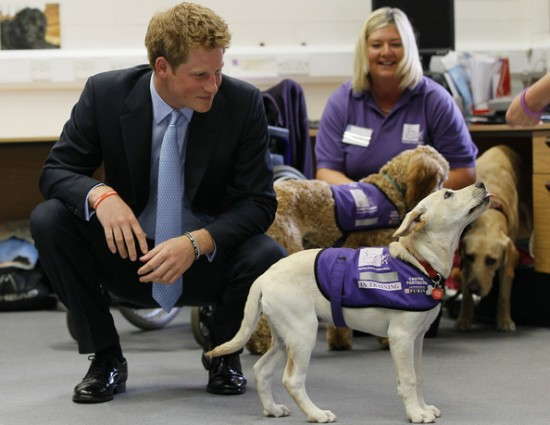 Prince Harry with Canine Partners
