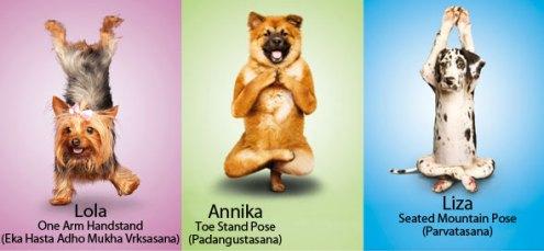 Doggie yoga the Lady